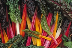 chard-swiss-bright-lights