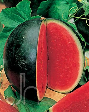 Watermelon Sugar Baby Charley S