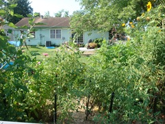 BackyardGardenAug2009 024