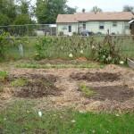 fall garden (after)