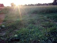 garden-sunset