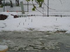 my garden!!!