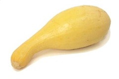 squash-yellowcrookneck